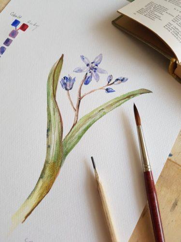 akvarel Kremer, ladoňka dvoulistá, malba
