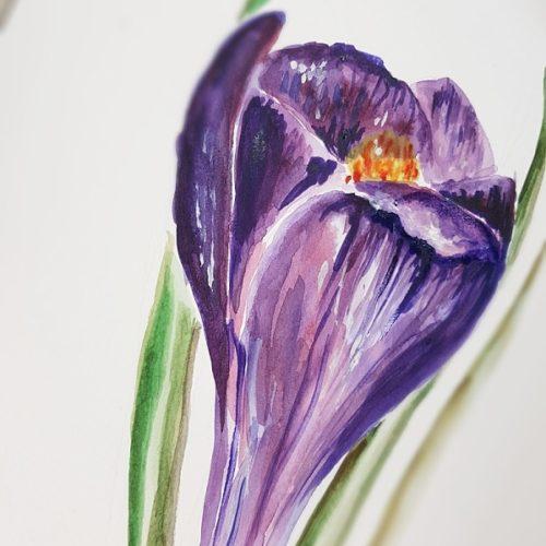 botanický akvarel výstava