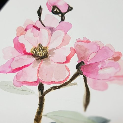 botanický Akvarel s Jitkou